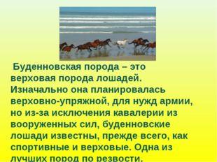 Буденновская порода – это верховая порода лошадей. Изначально она планировал