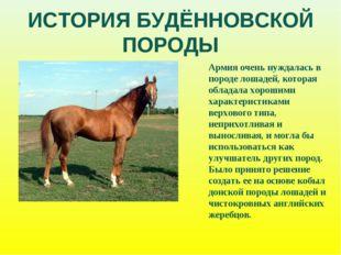 ИСТОРИЯ БУДЁННОВСКОЙ ПОРОДЫ Армия очень нуждалась в породе лошадей, которая о