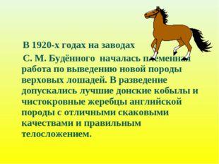 В 1920-х годах на заводах С. М. Будённого началась племенная работа по вывед