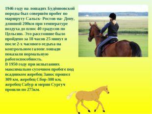 1946 году на лошадях Будённовской породы был совершён пробег по маршруту Саль