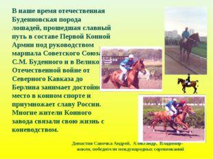 В наше время отечественная Буденновская порода лошадей, прошедшая славный пут