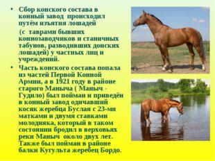 Сбор конского состава в конный завод происходил путём изъятия лошадей (с тавр