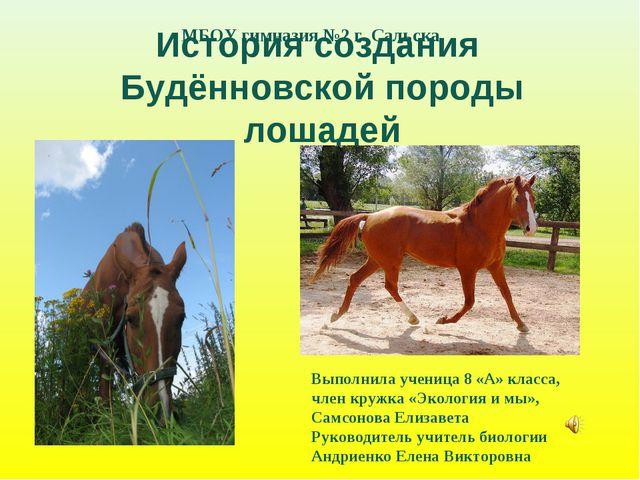 История создания Будённовской породы лошадей Выполнила ученица 8 «А» класса,...