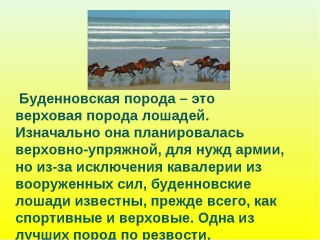 Буденновская порода – это верховая порода лошадей. Изначально она планировал...