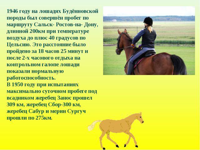 1946 году на лошадях Будённовской породы был совершён пробег по маршруту Саль...