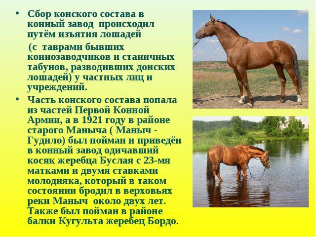 Сбор конского состава в конный завод происходил путём изъятия лошадей (с тавр...
