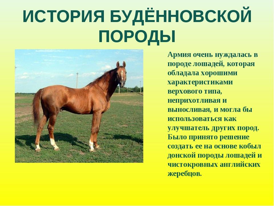 ИСТОРИЯ БУДЁННОВСКОЙ ПОРОДЫ Армия очень нуждалась в породе лошадей, которая о...