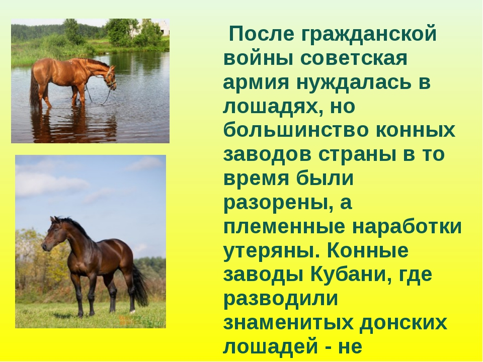 После гражданской войны советская армия нуждалась в лошадях, но большинство...