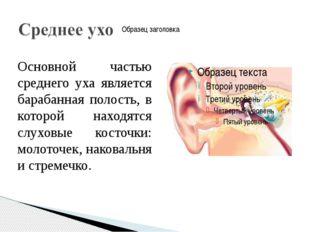Основной частью среднего уха является барабанная полость, в которой находятся