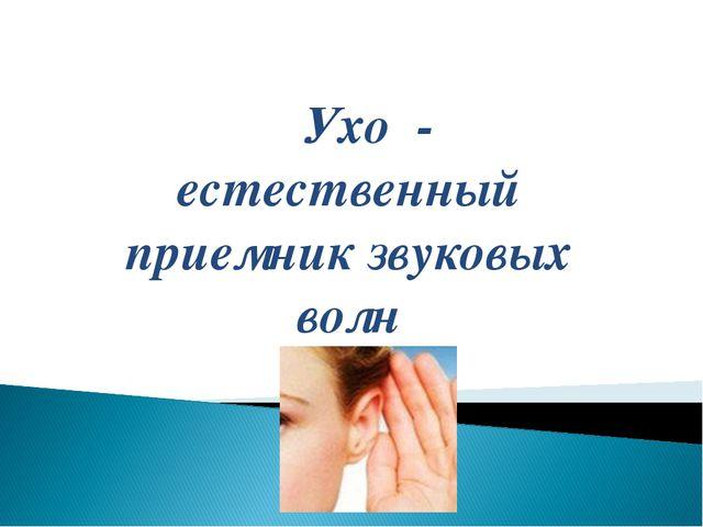 Ухо - естественный приемник звуковых волн