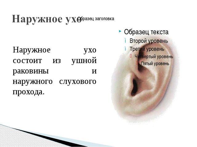 Наружное ухо состоит из ушной раковины и наружного слухового прохода.