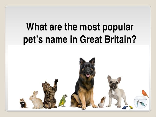 What are the most popular pet's name in Great Britain?