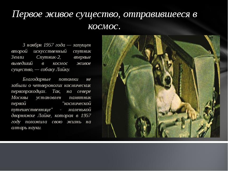 Первое живое существо, отправившееся в космос. 3 ноября 1957 года — запущен в...