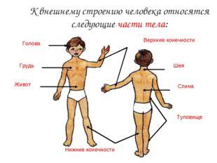 К внешнему строению человека относятся следующие части тела: Голова Туловище