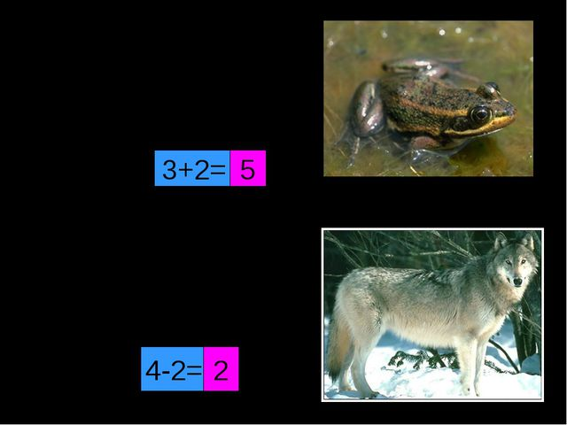 Скачет зверушка Не рот, а ловушка. Попадут в ловушку И комар, и мушка. 3+2= 5...