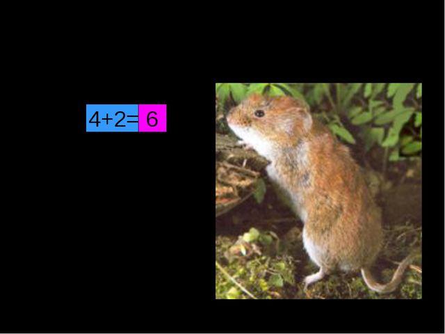 Под полом таится, Кошки боится. 4+2= 6