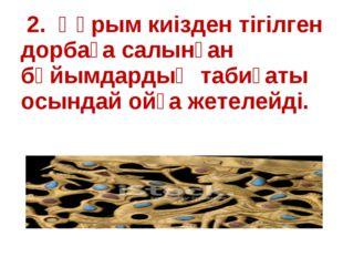 2. Құрым киізден тігілген дорбаға салынған бұйымдардың табиғаты осындай ойға