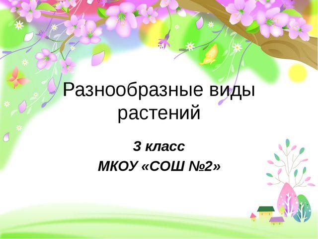 Разнообразные виды растений 3 класс МКОУ «СОШ №2»