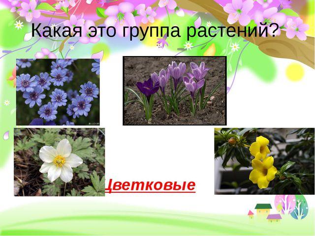 Какая это группа растений? Цветковые