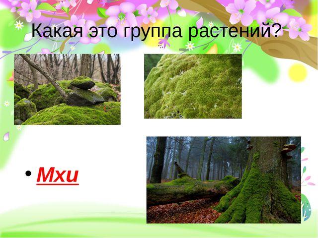 Какая это группа растений? Мхи
