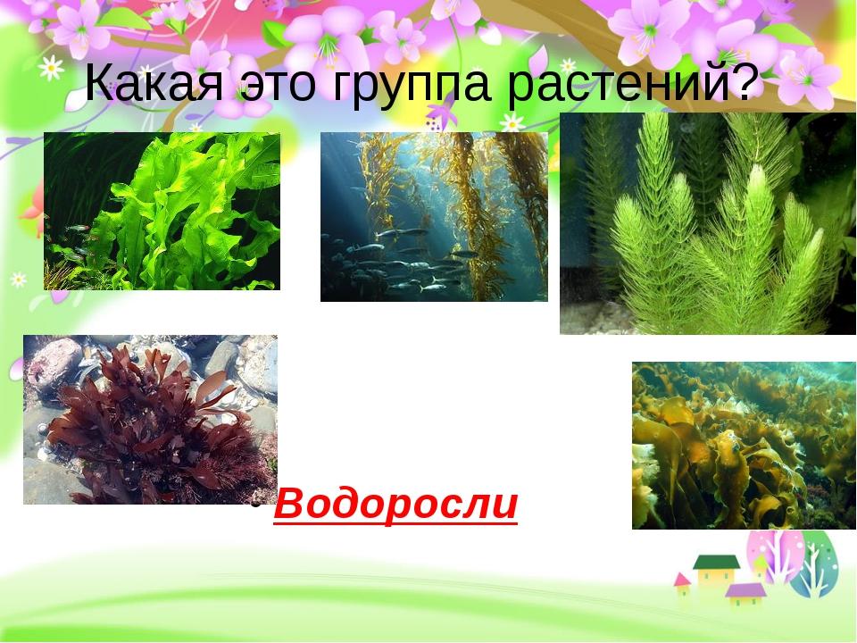 Какая это группа растений? Водоросли
