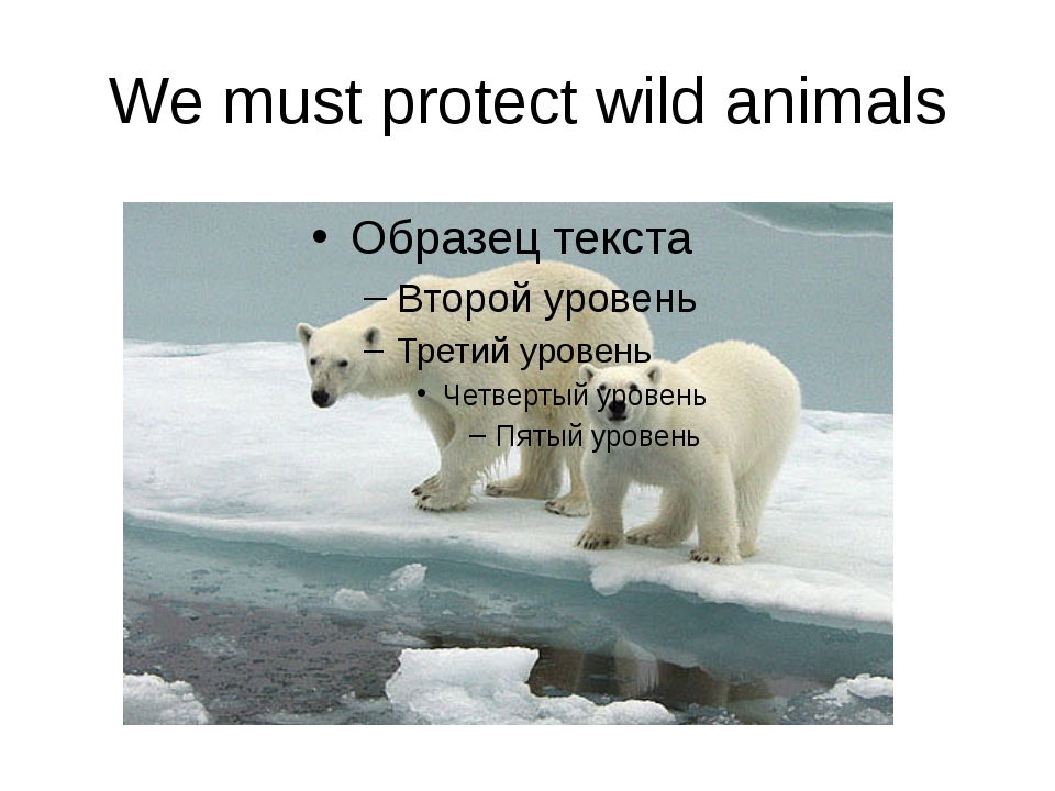 We must protect wild animals
