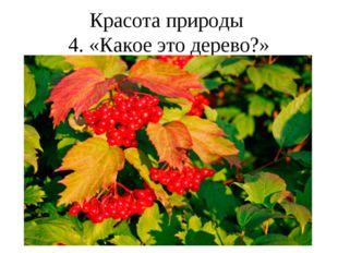 Красота природы 4. «Какое это дерево?»