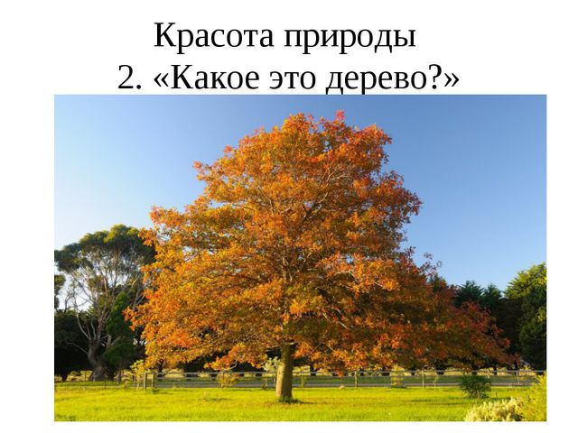 Красота природы 2. «Какое это дерево?»