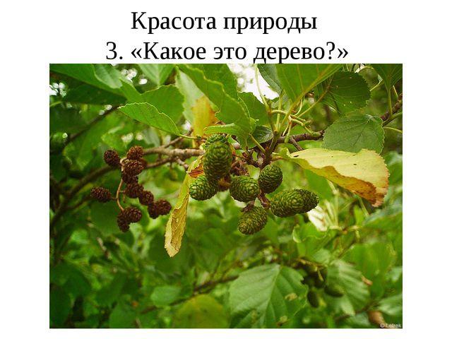 Красота природы 3. «Какое это дерево?»