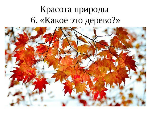 Красота природы 6. «Какое это дерево?»