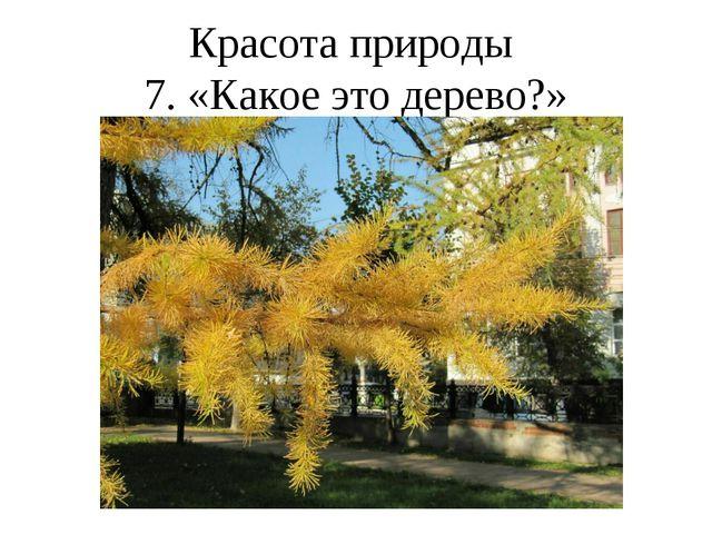 Красота природы 7. «Какое это дерево?»