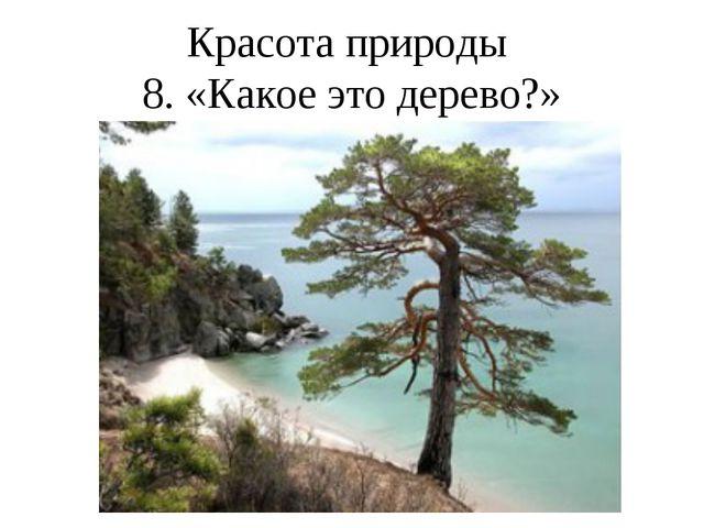 Красота природы 8. «Какое это дерево?»