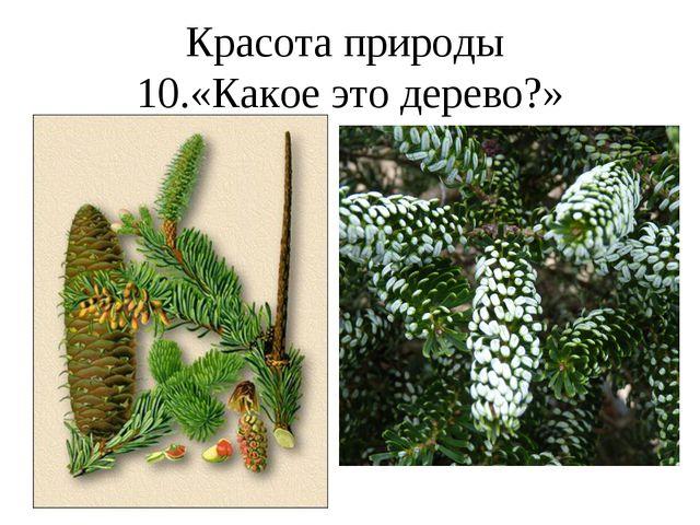 Красота природы 10.«Какое это дерево?»