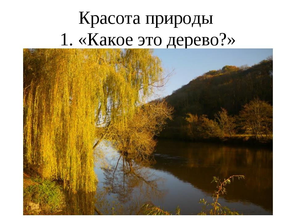 Красота природы 1. «Какое это дерево?»