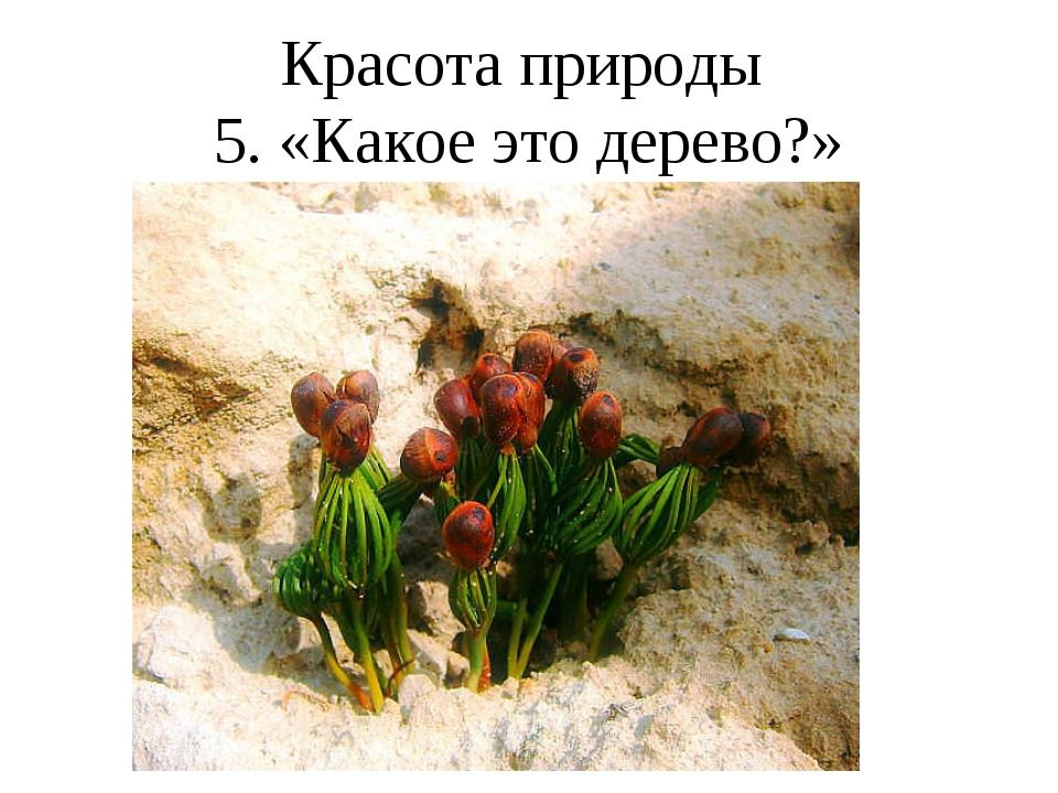 Красота природы 5. «Какое это дерево?»