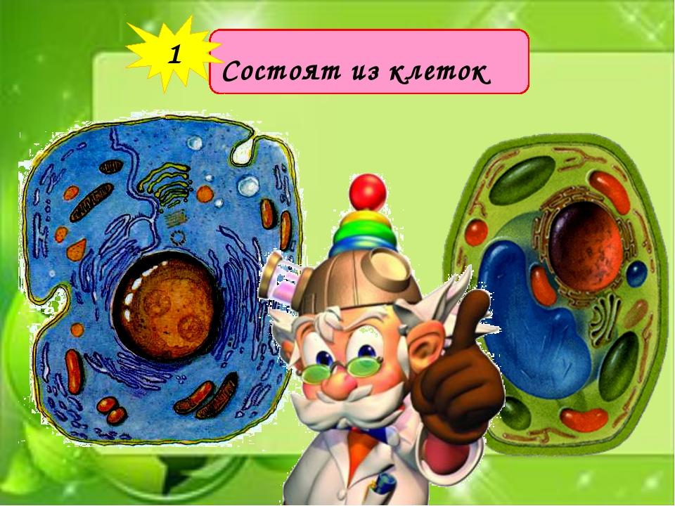 Состоят из клеток 1