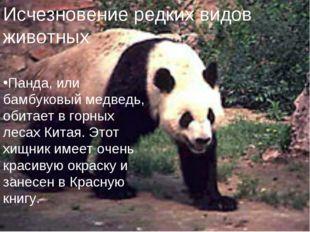 Исчезновение редких видов животных. Панда, или бамбуковый медведь, обитает в