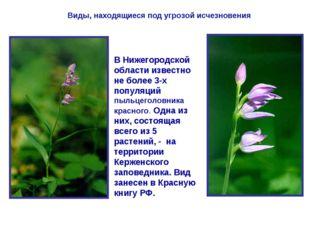 Виды, находящиеся под угрозой исчезновения В Нижегородской области известно н
