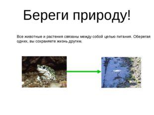 Береги природу! Все животные и растения связаны между собой цепью питания. Об