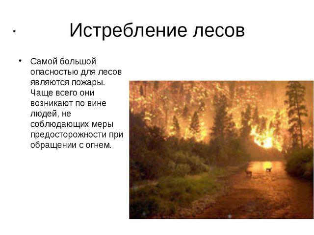 Истребление лесов Самой большой опасностью для лесов являются пожары. Чаще вс...