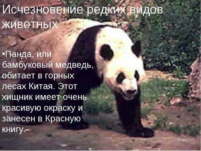 Исчезновение редких видов животных. Панда, или бамбуковый медведь, обитает в...