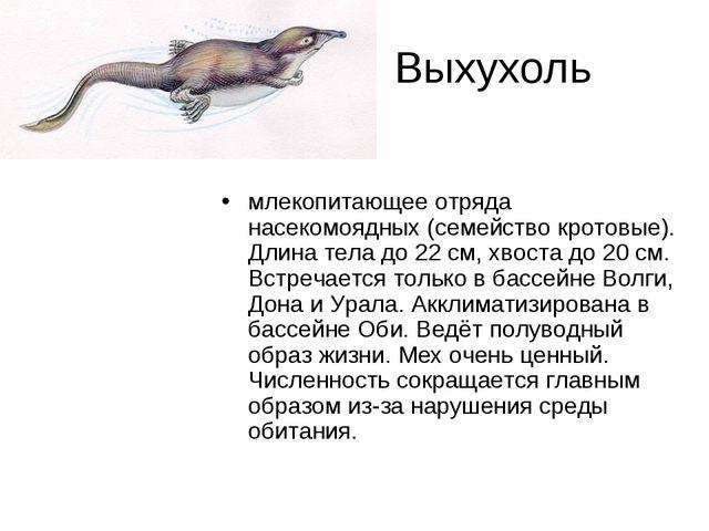 Выхухоль млекопитающее отряда насекомоядных (семейство кротовые). Длина тела...
