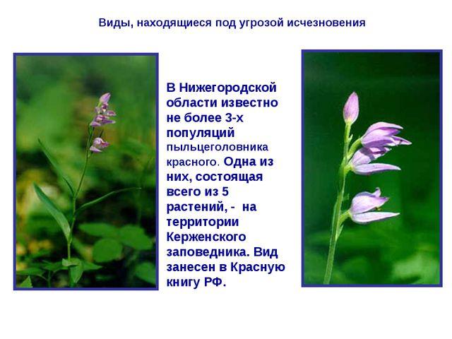 Виды, находящиеся под угрозой исчезновения В Нижегородской области известно н...