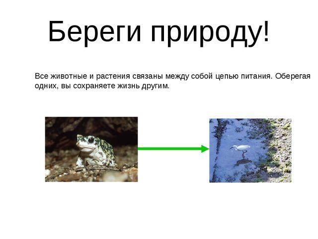 Береги природу! Все животные и растения связаны между собой цепью питания. Об...