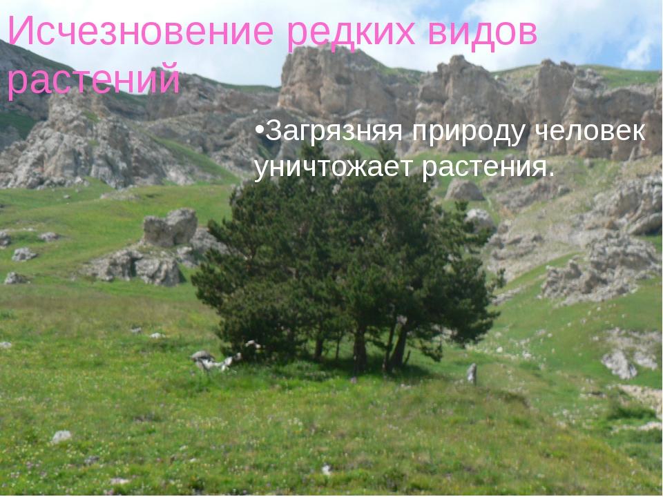 Исчезновение редких видов растений. Загрязняя природу человек уничтожает раст...