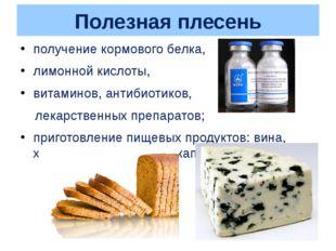 Полезная плесень получение кормового белка, лимонной кислоты, витаминов, анти