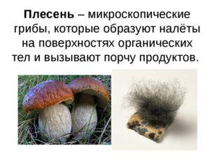 Плесень – микроскопические грибы, которые образуют налёты на поверхностях орг