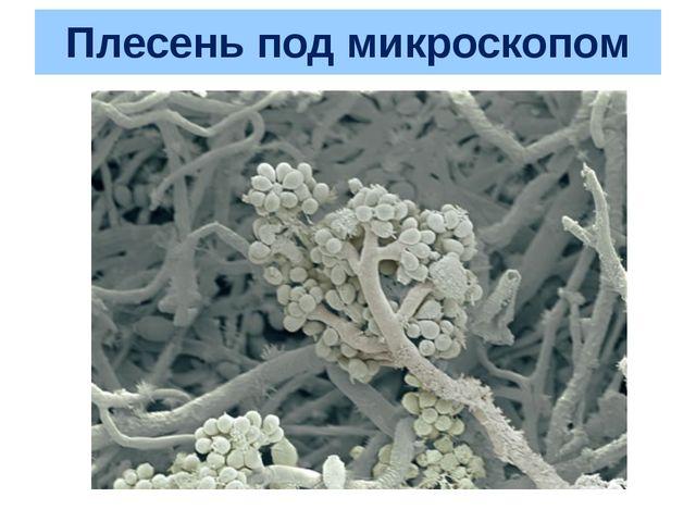 Плесень под микроскопом