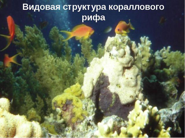 Видовая структура кораллового рифа