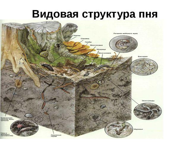 Видовая структура пня